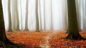 10 petits trucs pour traverser automne 17616