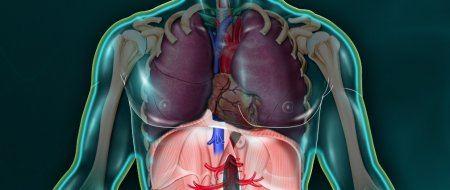 Le diaphragme